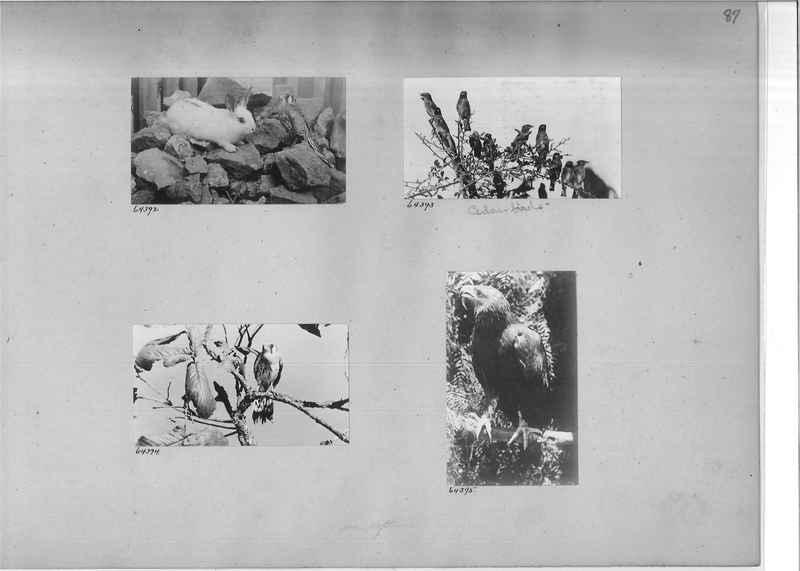 Mission Photograph Album - Mexico #04 page 0087