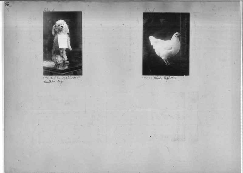 Mission Photograph Album - Miscellaneous #02 Page 0056
