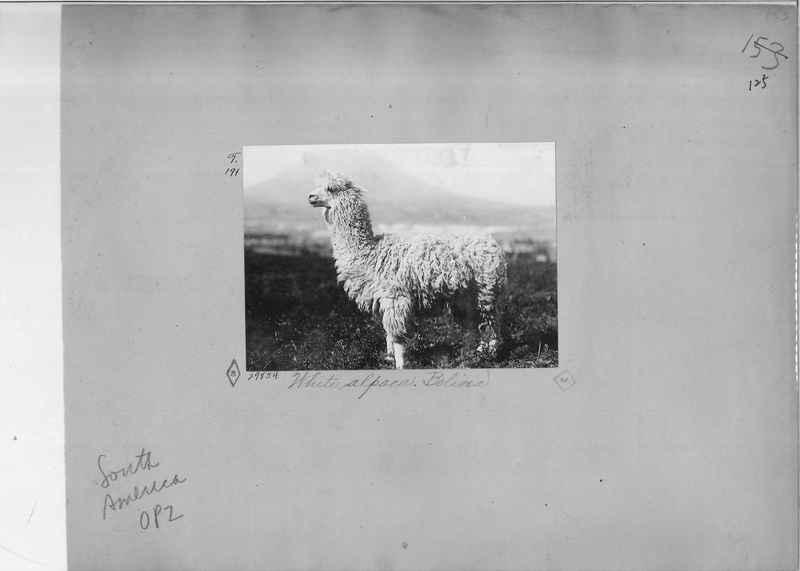 Mission Photograph Album - South America O.P. #2 page 0125