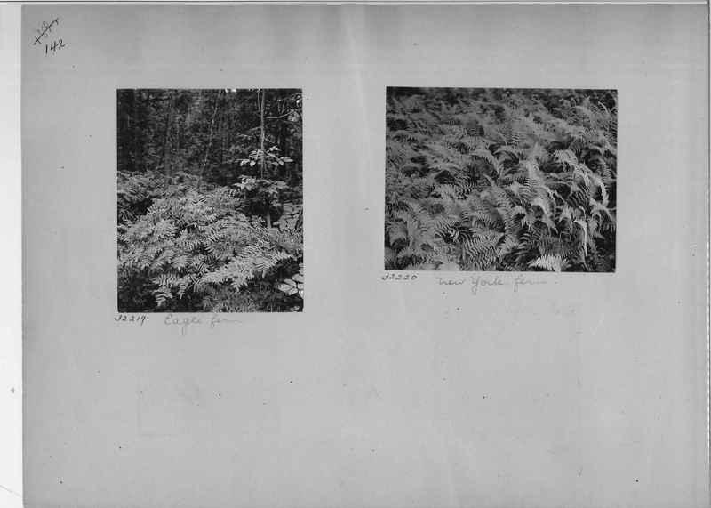 Mission Photograph Album - America #1 page 0142