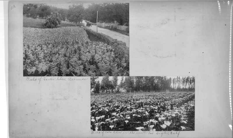 Mission Photograph Album - America #2 page 0218