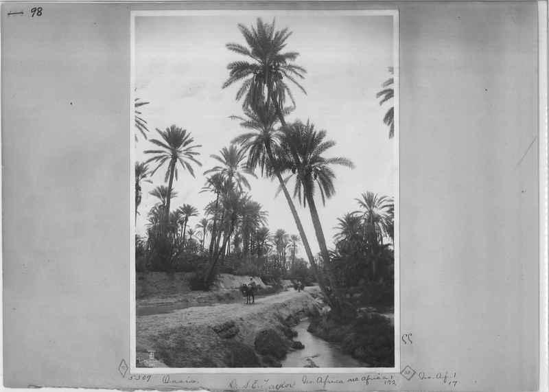 africa-madeira-op-03_0098.jpg