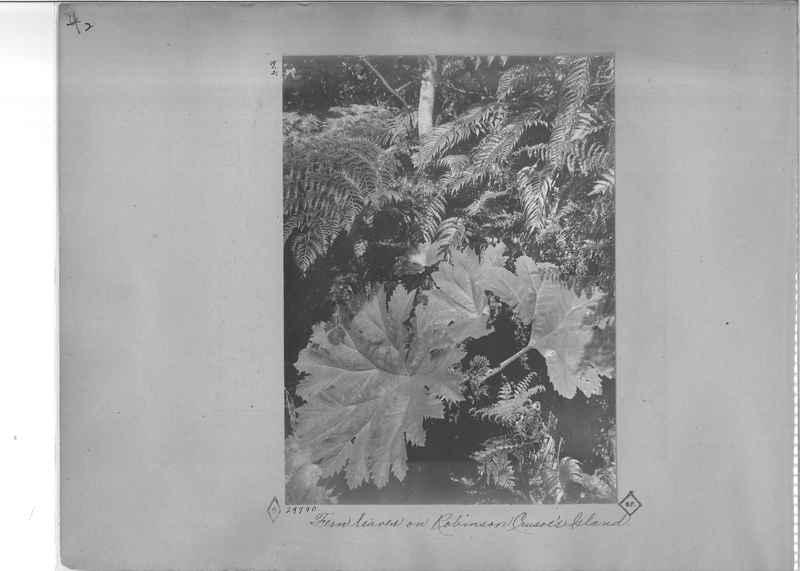 Mission Photograph Album - South America O.P. #2 page 0002