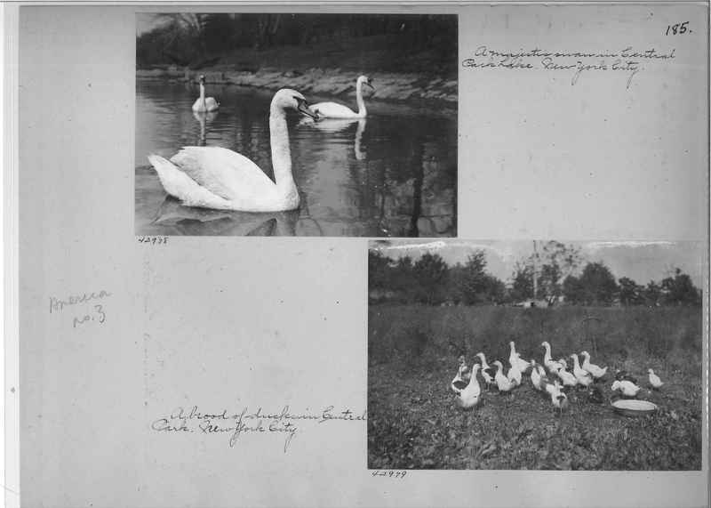 Mission Photograph Album - America #3 page 0185