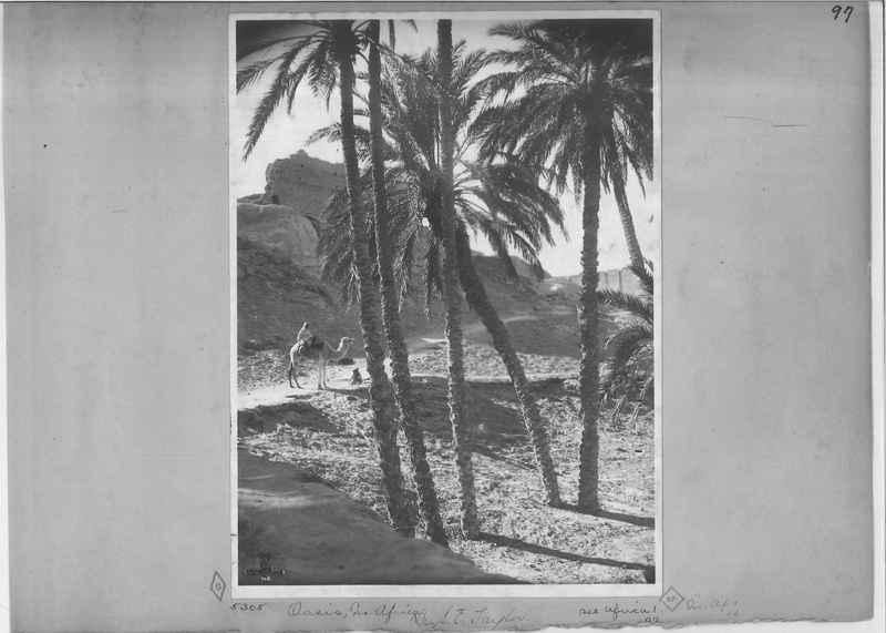 africa-madeira-op-03_0097.jpg