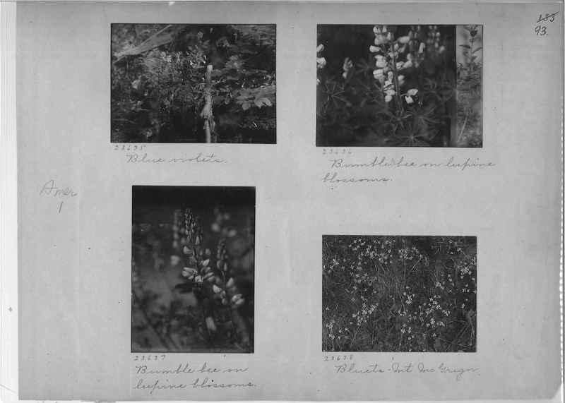 Mission Photograph Album - America #1 page 0093
