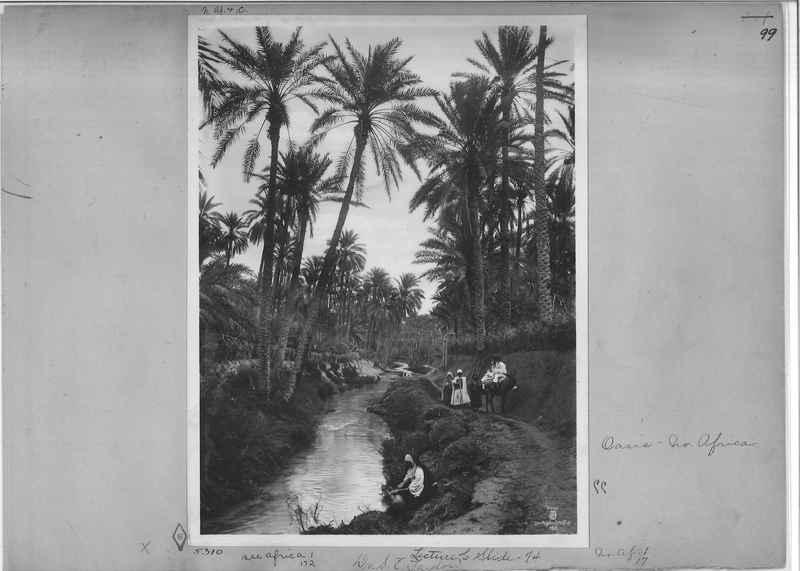 africa-madeira-op-03_0099.jpg
