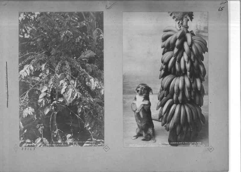 Mission Photograph Album - Mexico - O.P. #01 Page 0065